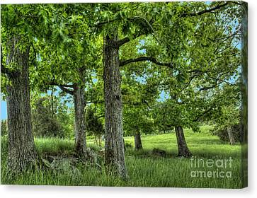 Shade Trees Canvas Print by Pete Hellmann