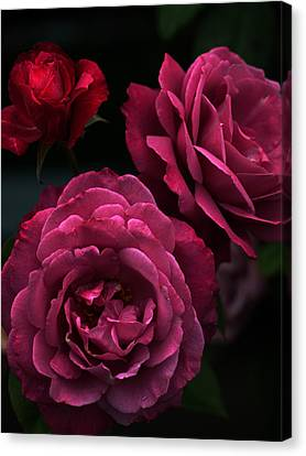 Shaded Roses Canvas Print by Kim