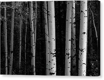 Shades Of A Forest Canvas Print