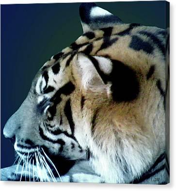 Shades Of A Tiger  Series Canvas Print by Debra     Vatalaro