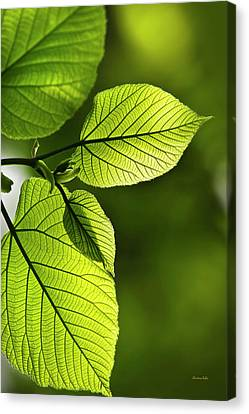 Shades Of Green Canvas Print by Christina Rollo