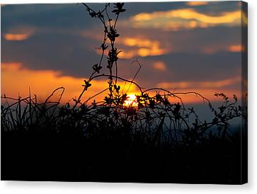 Canvas Print featuring the photograph Shades Of Sun by Everett Houser