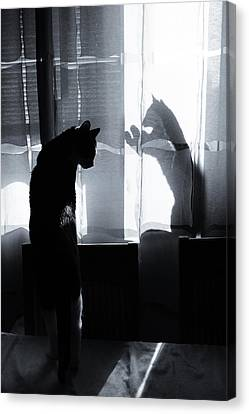 Shadow Cats Canvas Print by Cambion Art