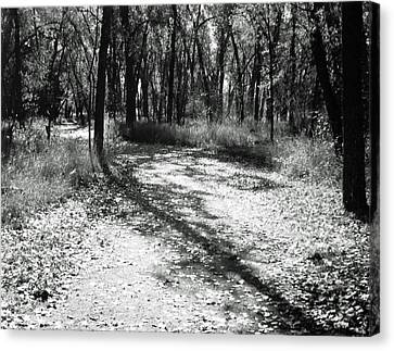 Shadow Path Canvas Print