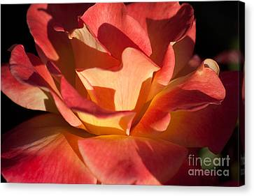 Shadow Play Canvas Print by Brenda Carpenter