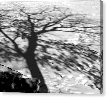 Shadow Tree  Herrick Lake  Naperville Illinois Canvas Print by Michael Bessler