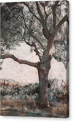 Shadow Tree Canvas Print by Jenny Rainbow