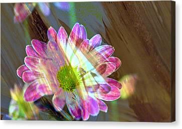 Shadowed Flower Canvas Print