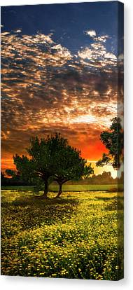 Shadows In The Meadow Left Of The Triple Canvas Print by Debra and Dave Vanderlaan