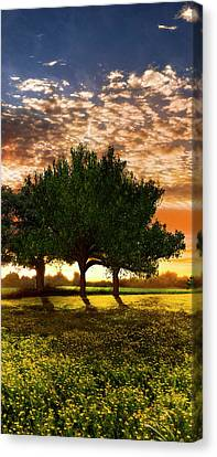 Shadows In The Meadow Middle Of The Triple Canvas Print by Debra and Dave Vanderlaan