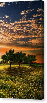 Shadows In The Meadow Right Of The Triple Canvas Print by Debra and Dave Vanderlaan