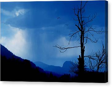 Shadows In The Rain  Canvas Print by John Poon