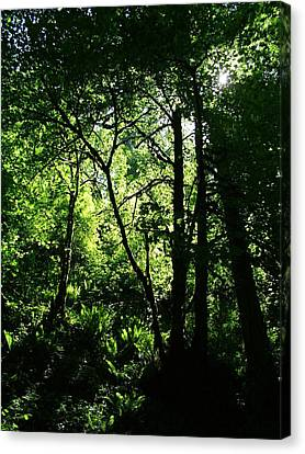 Shadows Of The Forest Canvas Print by Nick Gustafson