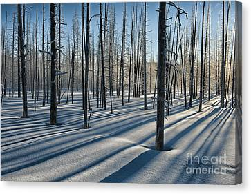 Shadows Of The Forest Canvas Print by Sandra Bronstein