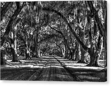 Shadows Of Time Tomotley Plantation Live Oak Art Canvas Print by Reid Callaway