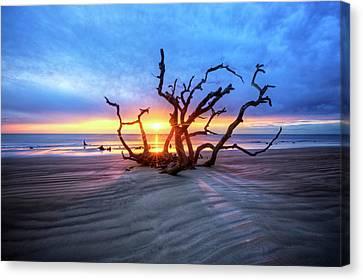 Shadows On Driftwood Beach Canvas Print by Debra and Dave Vanderlaan