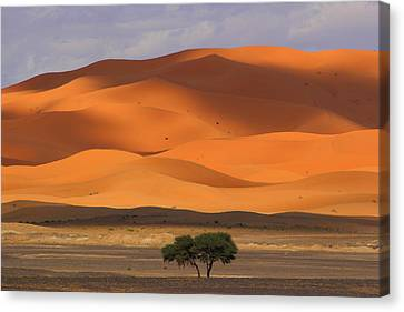 Canvas Print featuring the photograph Shadows On The Dunes by Ramona Johnston