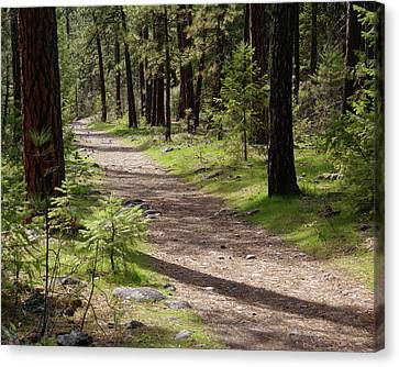 Canvas Print featuring the photograph Shadows On The Path by Ben Upham III