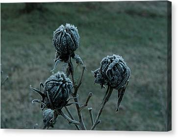 Shadowy Frozen Pods From The Darkside Canvas Print by Douglas Barnett