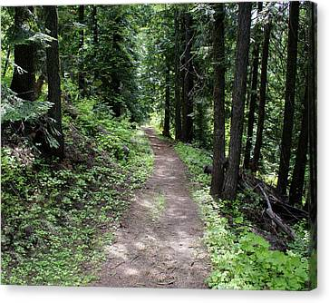 Canvas Print featuring the photograph Shady Grove Path by Ben Upham III