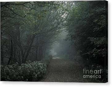 Shady Lane Canvas Print by Stan and Anne Foster