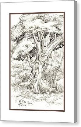 Shady Tree Canvas Print by Ruth Renshaw