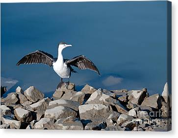 Canvas Print featuring the painting Shag Drying The Wings by Yurix Sardinelly