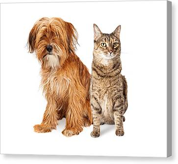 Shaggy Dog And Tabby Cat Sitting Together Canvas Print by Susan Schmitz