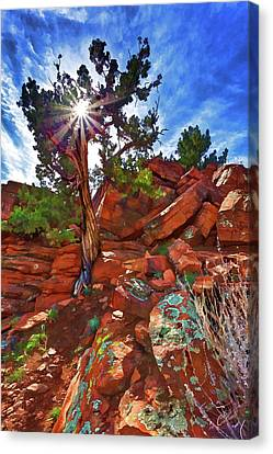Shaman's Dome Juniper Canvas Print