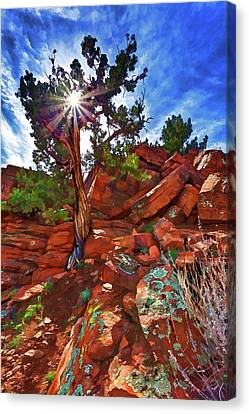Shaman's Dome Juniper Canvas Print by ABeautifulSky Photography