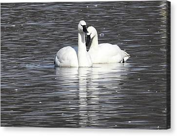 Sharing A Moment Canvas Print by Gary Wightman