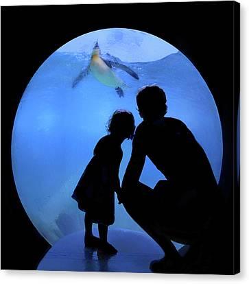 Sharing The Joy - Penguins - Aquarium Canvas Print by Nikolyn McDonald