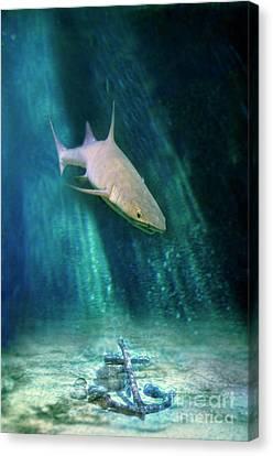 Shark And Anchor Canvas Print by Jill Battaglia