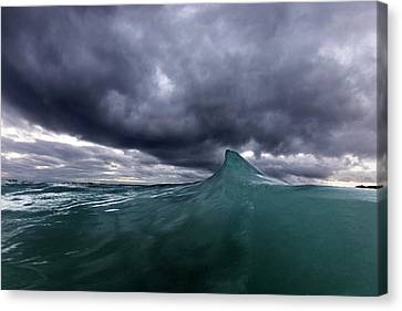 Shark Fin Soup Canvas Print by Sean Davey