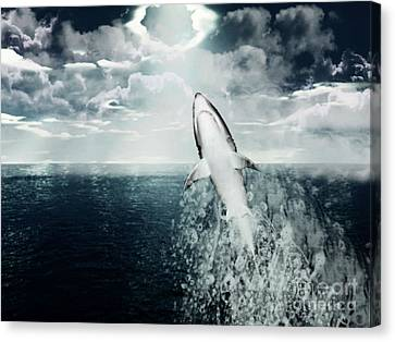 Shark Watch Canvas Print