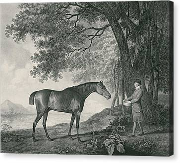 Sharke Canvas Print by George Stubbs