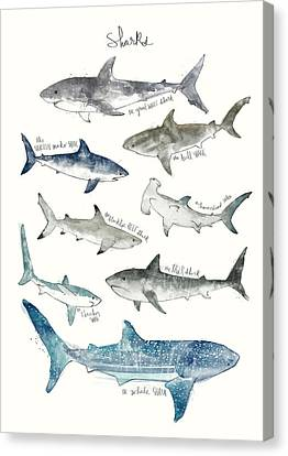 Fish Canvas Print - Sharks by Amy Hamilton