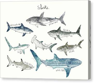Fish Canvas Print - Sharks - Landscape Format by Amy Hamilton