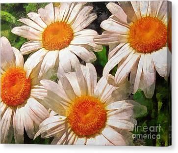 Shasta Daisies 2015 Canvas Print