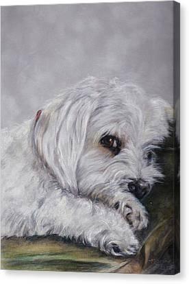 Shasta Canvas Print by Marchelle Brotz