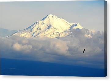 Shasta Near Sunset Canvas Print