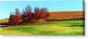 Shaw And Smith Winery Canvas Print by Bill Robinson