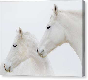 She Dreamed Of White Horses Canvas Print by Ron  McGinnis