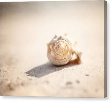 She Sells Sea Shells Canvas Print by Lisa Russo
