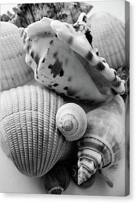 She Sells Seashells Canvas Print
