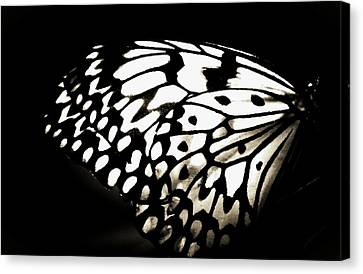 She Stands Out Canvas Print by The Art Of Marilyn Ridoutt-Greene