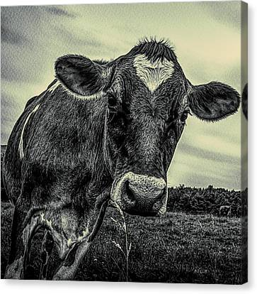 Canvas Print - She Wears Her Heart On Her Head by Bob Orsillo