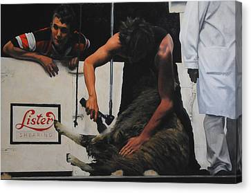 Shearing Canvas Print