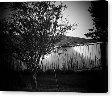 Shed  And Tree Canvas Print by Michael L Kimble