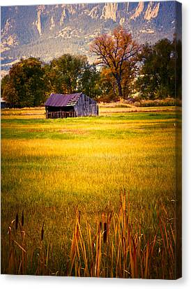 Shed In Sunlight Canvas Print by Marilyn Hunt